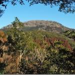 【第20山】猿山1,000m「実は奇跡の原始境」