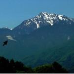 【第56山】日向山1660m「一反木綿から芸術鑑賞」