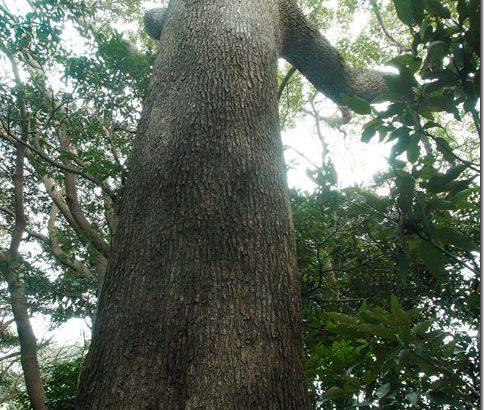 【第86山】灯明山96m「原生林が育む豊饒の海」