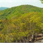 【第96山】護摩壇山1,372m、龍神岳1,382m「最高峰のネーミング」
