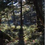 【第120山】シャウヅ山 1,835m「光と陰の境に」