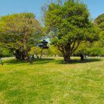 【第130山】池子の森自然公園「米軍占領のメリット・デメリット」