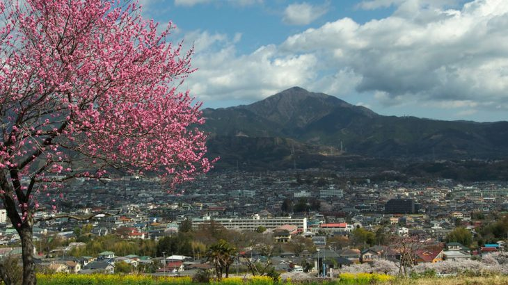 【第128山】渋沢丘陵 303m「お花見ハイキングなら」