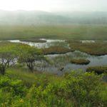 【第132山】八島湿原 約1,600m「手軽に湿原美を堪能」