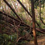 【第163山】三浦半島&鎌倉、台風後の山模様「嵐が来りて樹を倒す」