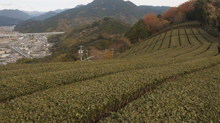 【190山】賎機山 171メートル(静岡県)低山ながら格の高い山